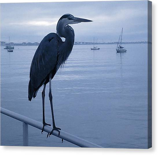 Heron In Blue Canvas Print