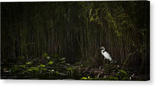 Heron In Grass Canvas Print