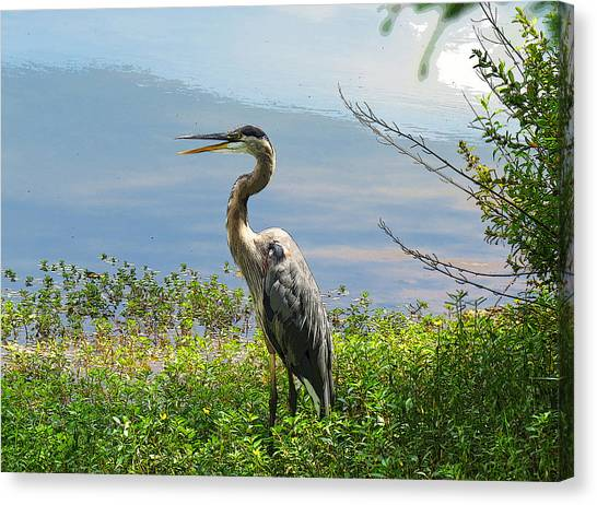 Heron On Lake Canvas Print
