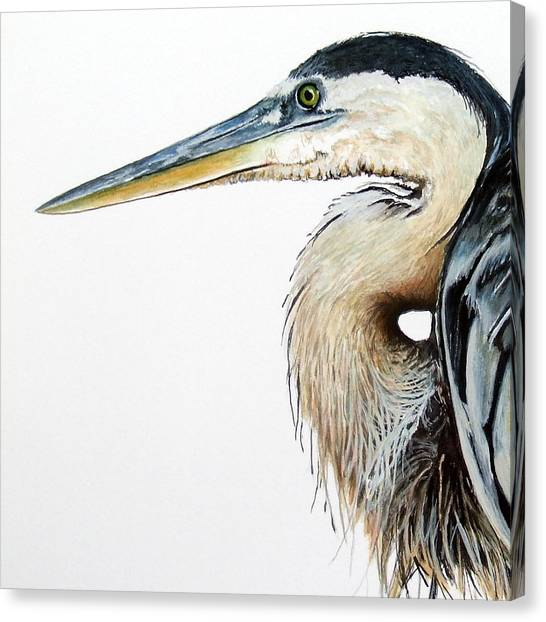 Heron Study Square Format Canvas Print