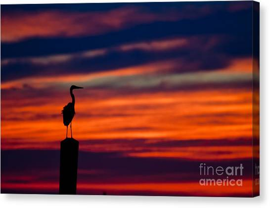 Heron Sunset Silhouette Canvas Print