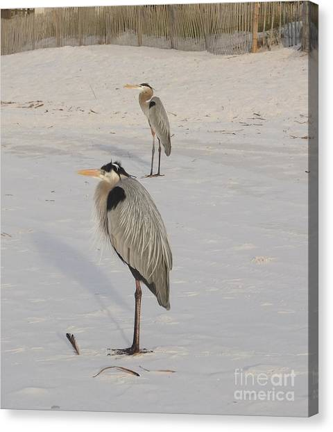 Heron Two Canvas Print