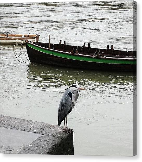 Herons Canvas Print - Heron Watching The River Rush Past In by K Bond