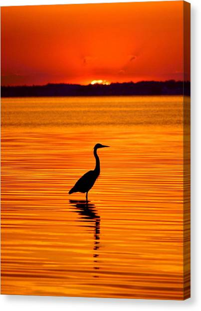 Heron With Burnt Sienna Sunset Canvas Print