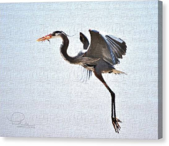 Heron With Catch Canvas Print