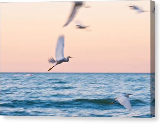 Herons Flying Over The Sea  Canvas Print by Jose Maciel