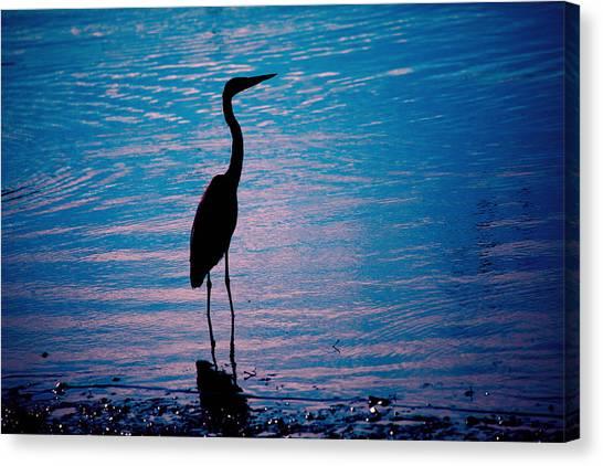 Herons Moment Canvas Print