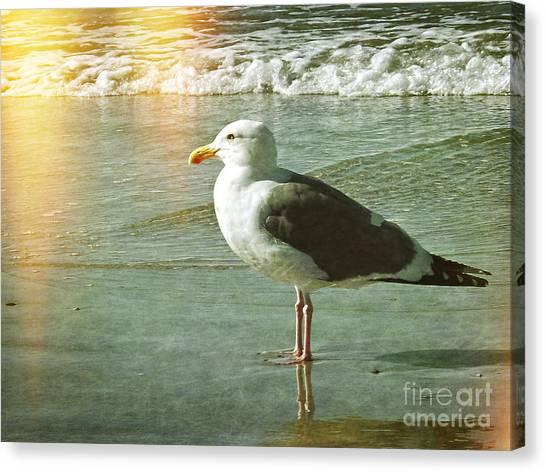 Herring Gull Watching Canvas Print