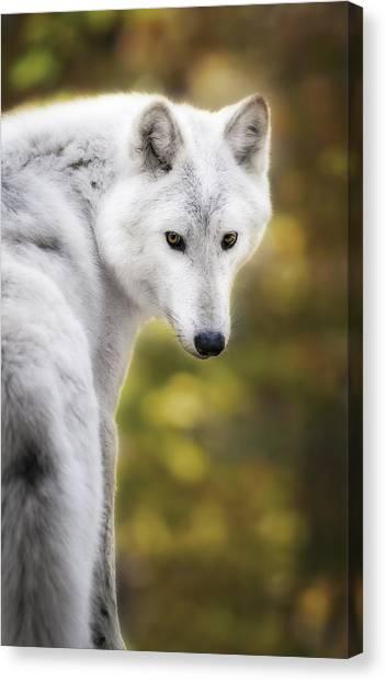 Arctic Wolf Canvas Print - Hey You by Eduard Moldoveanu