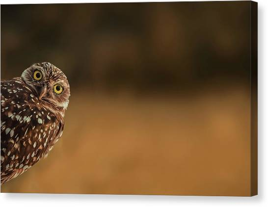 Cute Bird Canvas Print - Hi There! by Marcus Hennen