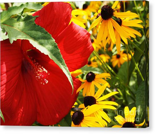 Hibiscus And Black Eyed Susans Canvas Print