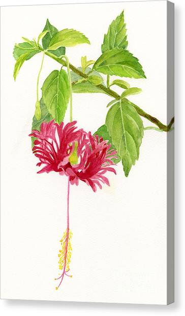 Hibiscus Canvas Print - Hibiscus Chinese Red Lantern by Sharon Freeman