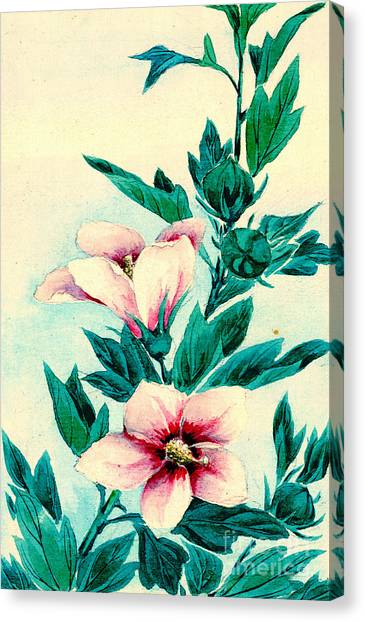 Althea Canvas Print - Hibiscus Flowers 1870 by Padre Art