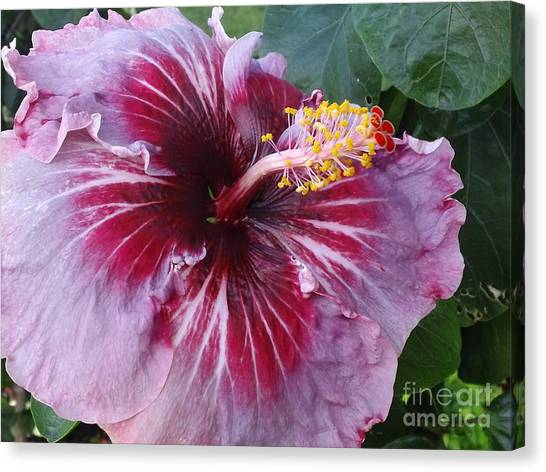 Hibiscus In Hawaii Canvas Print