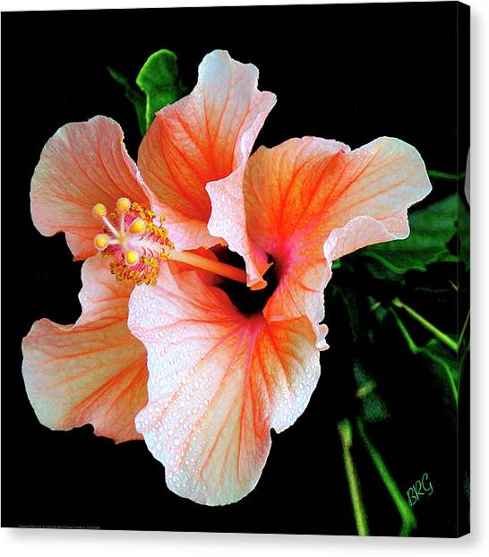 Hibiscus Canvas Print - Hibiscus Spectacular by Ben and Raisa Gertsberg