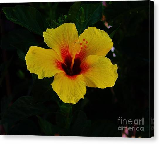 Hibiscus Stand Out  Canvas Print