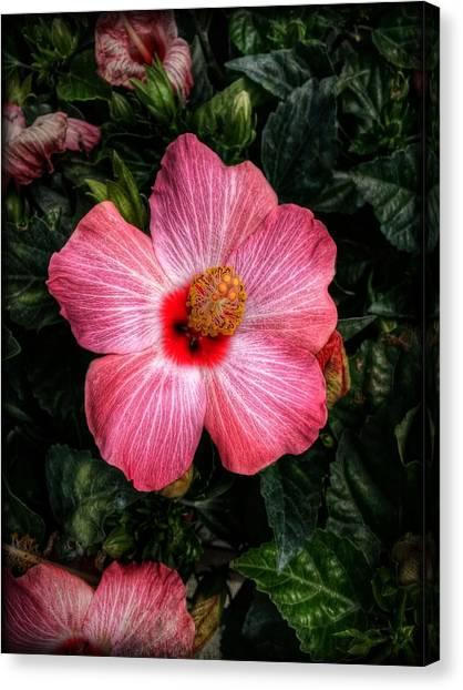 Hibiscus Sunset Canvas Print