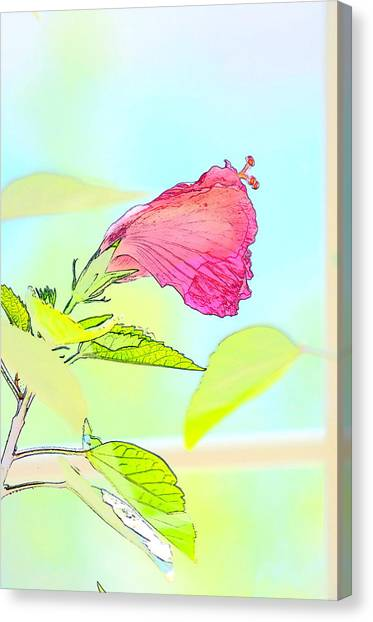 Hibiscus Unbloomed Canvas Print
