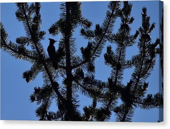 Hidden Bluejay In Silhouette Canvas Print by Rich Rauenzahn