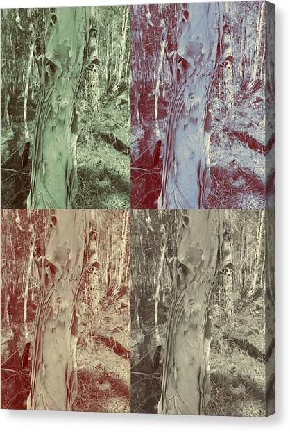 Hidden  Canvas Print by Chasity Johnson