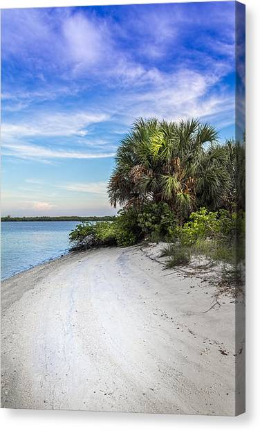 Tampa Bay Rays Canvas Print - Hidden Cove by Marvin Spates
