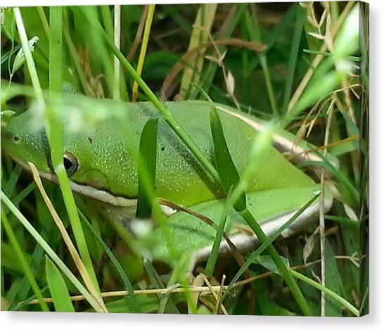 Hidden Frog Canvas Print
