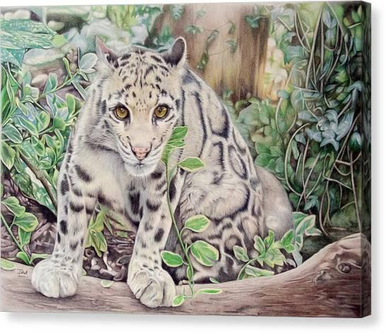Canvas Print - Hidden In Plain Sight - Clouded Leopard by Jill Parry