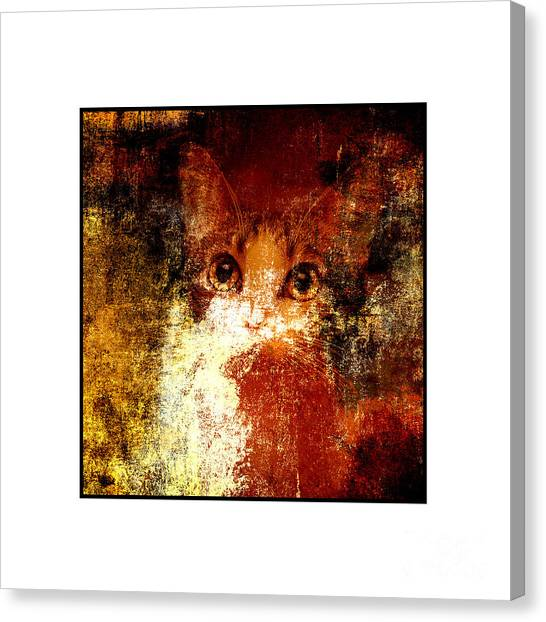 Andee Design Cat Eyes Canvas Print - Hidden Square White Frame by Andee Design