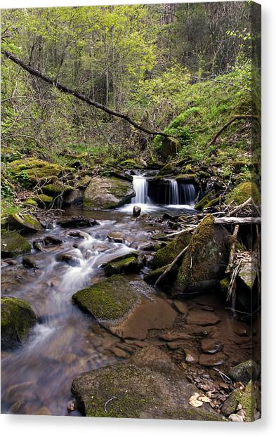 Hidden Streambed  Canvas Print by David Lester