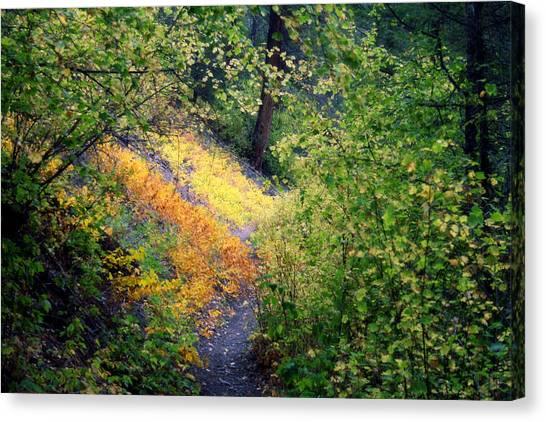 Hidden Trail Canvas Print