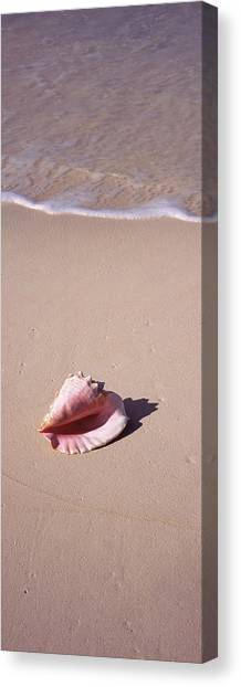 Conch Shells Canvas Print - High Angle View Of A Conch Shell by Panoramic Images