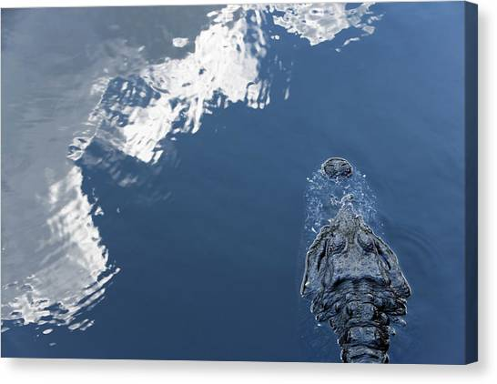 Crocodiles Canvas Print - High Angle View Of A Partially by Ron Koeberer