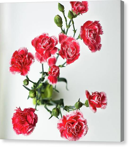 High Angle View Of Red Carnations Canvas Print by Kateryna Kyslyak / Eyeem