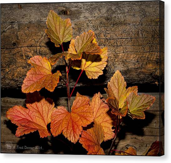 High Bush Cranberry Leaves Canvas Print