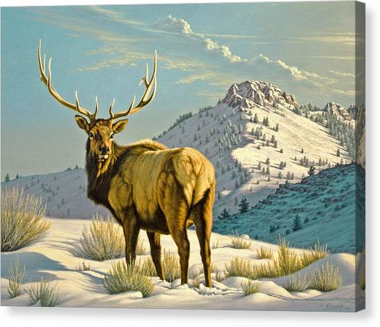 Yellowstone Canvas Print - High Country Bull by Paul Krapf