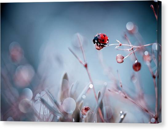 Ladybugs Canvas Print - High Diving by Fabien Bravin