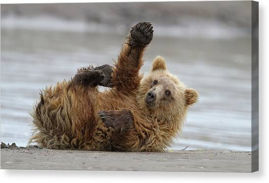 Brown Bears Canvas Print - High Five by Alfred Forns