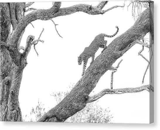 Camouflage Canvas Print - High Key Leopard by Jaco Marx