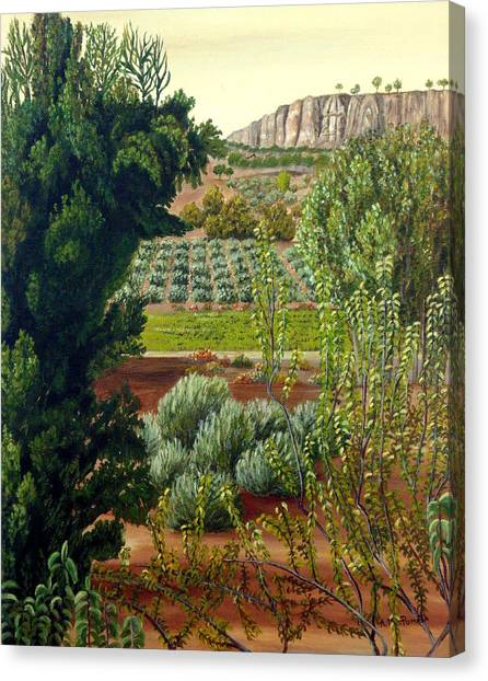 High Mountain Olive Trees  Canvas Print