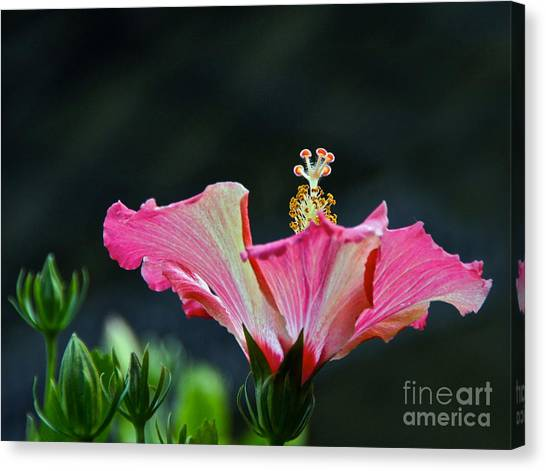 High Speed Hibiscus Flower Canvas Print