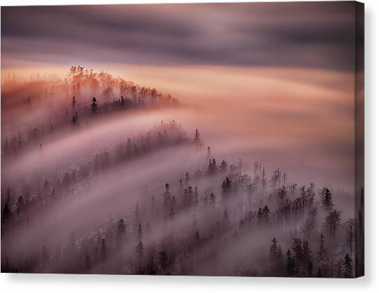 Foggy Forests Canvas Print - High Tide by