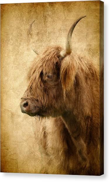 Highland Bull Canvas Print