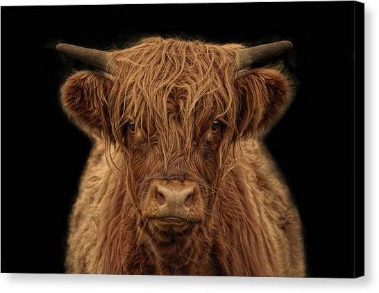 Sec Canvas Print - Highlander by Joachim G Pinkawa