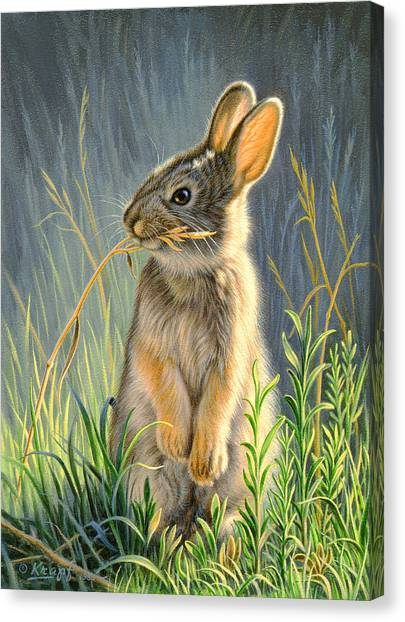 Rabbit Canvas Print - Highly Selective by Paul Krapf