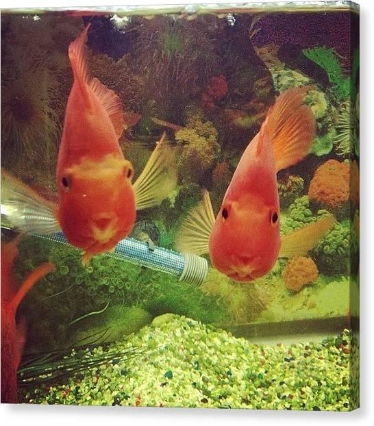 Goldfish Canvas Print - Hiiiiiiiiiiii #fish #cute #lemonleaf by Leann Ridulfo