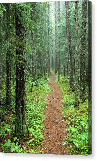 Hike To White River In Pukaskwa National Park Canvas Print