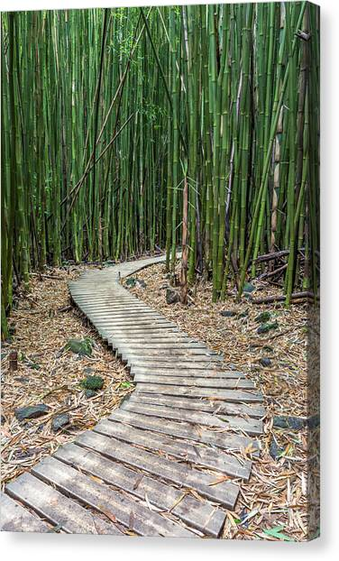 Forest Paths Canvas Print - Hiking Through The Bamboo Forest by Pierre Leclerc Photography