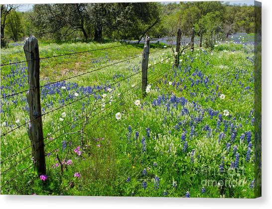 Hill Country Wildflowers Canvas Print by Cathy Alba