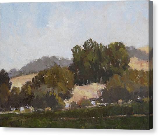 Robert Frank Canvas Print - Hillside Eucalyptus by Robert Frank