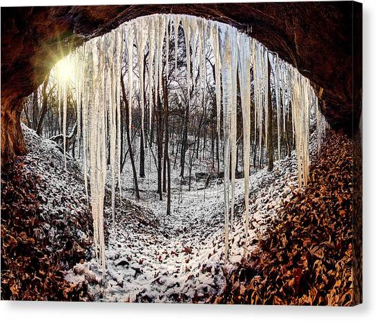 Hinding From Winter Canvas Print